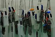 Development of Standard Operating Procedures (SOPs) in Indonesian Abattoirs
