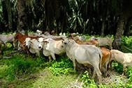 East Kalimantan Breeders Support Project